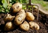 """title=""""Seed, Potatoes, 3kg"""" onmouseover=""""this.title=´´;"""""""
