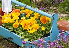 """title=""""Bedding Packs, grown by Oderings"""" onmouseover=""""this.title=´´;"""""""