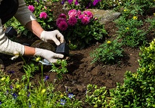"""title=""""Bedding Plants, grown by us"""" onmouseover=""""this.title=´´;"""""""