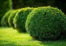 """title=""""Shrubs oderings grown"""" onmouseover=""""this.title=´´;"""""""