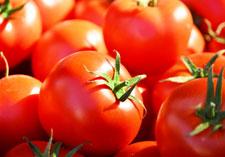 tomato large