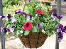 hanging baskets, vege baskets, flower baskets