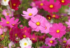 Fothergill Flowers