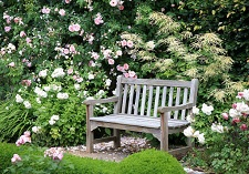 Plants, Roses